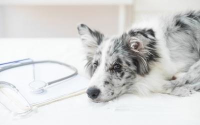 tibbi-olmayan-veteriner-urunleri-bildirimi